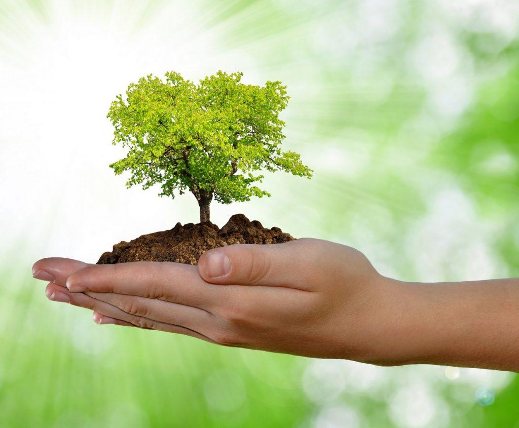 экологичность дома из бруса